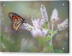 Acrylic Print featuring the photograph Monarch On Mint 1 by Lori Deiter