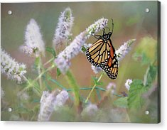 Acrylic Print featuring the photograph Monarch On Mint 2 by Lori Deiter