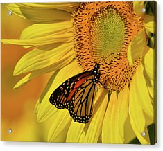Acrylic Print featuring the photograph Monarch On Sunflower by Ann Bridges