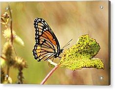 Monarch Acrylic Print by Rick Friedle