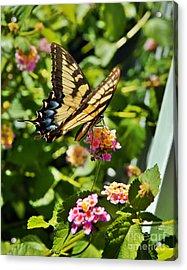 Monarch Summer Acrylic Print by Jeff McJunkin