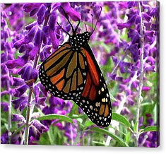Acrylic Print featuring the digital art Monarch by Timothy Bulone