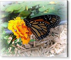 Monarch Acrylic Print by Trina Prenzi