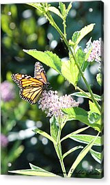 Monarch1 Acrylic Print