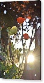 Monday Morning Sunrise Acrylic Print by John Glass
