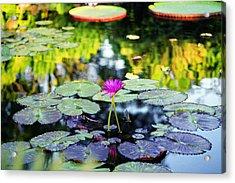 Monet Lilies Acrylic Print by Gary Dean Mercer Clark