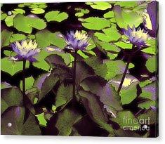 Monets Lillies Acrylic Print by Karen Lewis