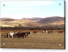 Mongolian Horses And Rider Acrylic Print