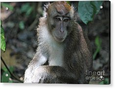 Monkey Business Acrylic Print