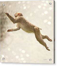 Acrylic Print featuring the photograph Monkey Jump by Roy  McPeak