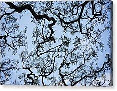 Monkey Pod Tree Patterns Acrylic Print