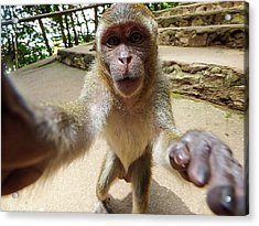 Monkey Taking A Selfie Acrylic Print