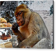 Monkey Tea Party Acrylic Print by Jan Steadman-Jackson