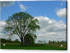 Acrylic Print featuring the photograph Monmouth Battlefield by Steven Richman