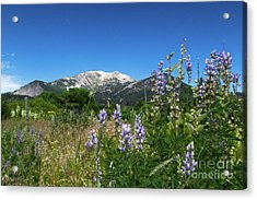 Mammoth Meadow   Acrylic Print