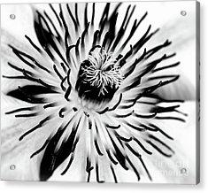 Mono Clematis Acrylic Print