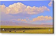 Mono Lake Rangelands Acrylic Print by Gus McCrea