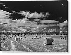 Mono Straw Bales Acrylic Print