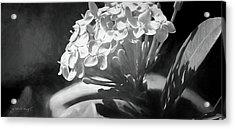 Monochrome Flora Acrylic Print