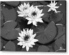 Monochrome Lilies Acrylic Print by Milena Ilieva