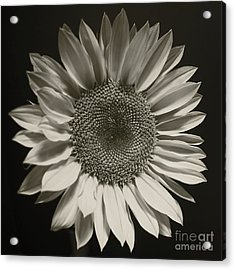 Monochrome Sunflower Acrylic Print