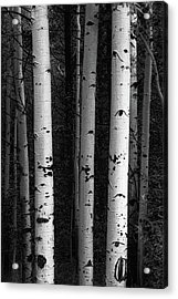 Acrylic Print featuring the photograph Monochrome Wilderness Wonders by James BO Insogna