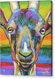Monsieur Goat Acrylic Print by Robert Phelps