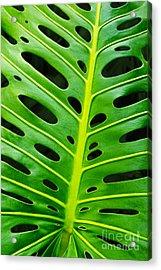 Monstera Leaf Acrylic Print by Carlos Caetano
