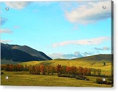 Montana Fall Trees Acrylic Print