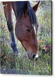 Montana Horse Acrylic Print by Diane E Berry