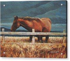 Montana Mare Study Acrylic Print by Steve Greco