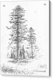 Montana-ponderosa Pine Acrylic Print