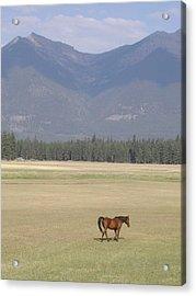 Montana Ranch Acrylic Print by Lisa Patti Konkol