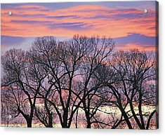 Acrylic Print featuring the photograph Montana Sunrise Tree Silhouette by Jennie Marie Schell