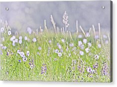 Acrylic Print featuring the photograph Montana Wildflowers Lavender by Jennie Marie Schell