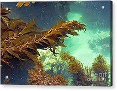Monterey Bay Seaweed Acrylic Print