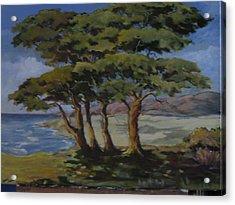 Monterey Bay Trees Acrylic Print by Barbara Moore