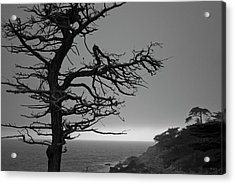 Acrylic Print featuring the photograph Monterey Penninsula I Bw by David Gordon