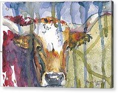 Montrose Longhorn Acrylic Print