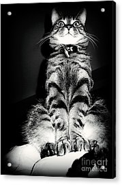 Monty Our Precious Cat Acrylic Print