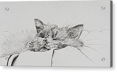 Monty  Sleepy Boy Acrylic Print by Vincent Alexander Booth