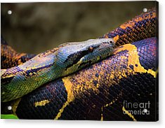 Don't Wear This Boa Acrylic Print