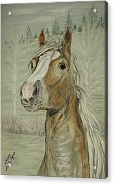 Acrylic Print featuring the drawing Mony by Melita Safran