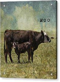 Moo Acrylic Print by Juli Scalzi