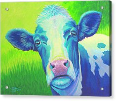 Moo Now Blue Cow Acrylic Print