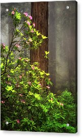 Moody Forest  Acrylic Print