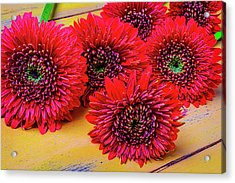 Moody Red Gerbera Dasies Acrylic Print by Garry Gay