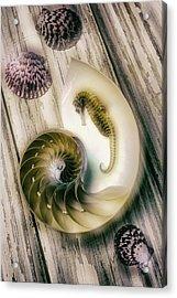 Moody Seahorse Acrylic Print by Garry Gay