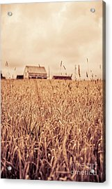 Moody Wheat Field Prince Edward Island Acrylic Print by Edward Fielding