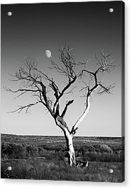 Moon And Memory At Bosque Del Apache N M Acrylic Print